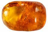Fossil Fly (Diptera) In Baltic Amber - #72187-1
