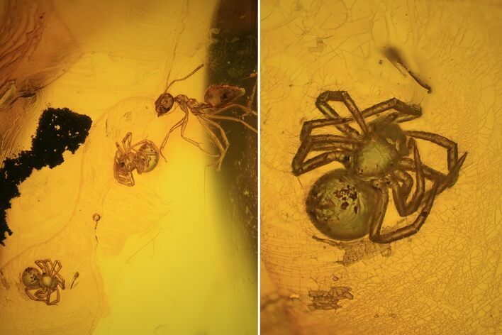 Fossil Ant (Formicidae) & Two Spiders (Aranea) In Baltic Amber