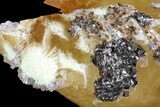 "7"" Golden, Twinned Calcite Crystals With Sphalerite - Elmwood Mine - #71920-2"