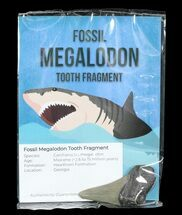 Carcharocles megalodon - Fossils For Sale - #72618