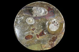 "6.8"" Round Fossil Goniatite Dish For Sale, #73988"