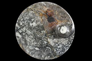 "Bargain, 4.2"" Round Fossil Goniatite Dish For Sale, #73733"