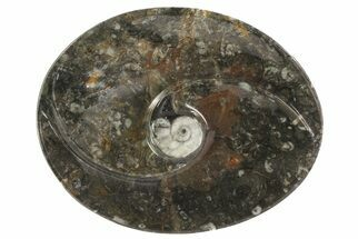 "Buy 4.7"" Oval Shaped Fossil Goniatite Dish - #73753"