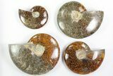Wholesale Lot: 25 Lbs Beautiful Polished Ammonites - 18 Pieces - #76996-1