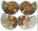 "Wholesale: 7 to 8"" Cut Ammonite Pairs (Grade B/C) - 5 Pairs - #77331-3"