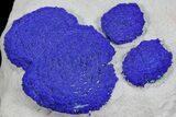 Brilliant Blue Azurite Sun Cluster On Rock - Australia - #77295-1