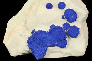 Buy Brilliant Blue Azurite Sun Cluster On Rock - Australia - #77629