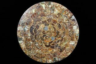 "Buy 12.2"" Composite Plate Of Agatized Ammonite Fossils - #77785"