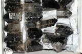 "Wholesale Lot: 21 Lbs Cut base Smoky Quartz Crystals (2-4"") - Brazil - #77822-3"