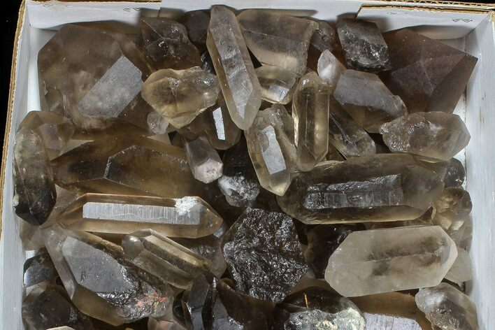 "Wholesale Lot: 22 Lbs Smoky Quartz Crystals (2-4"") - Brazil"
