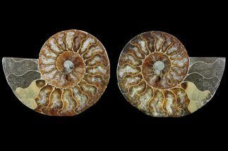 "4.3"" Cut & Polished Ammonite Pair - Agatized For Sale, #78551"