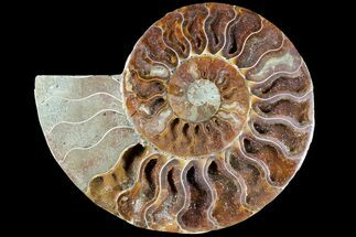 "Buy 4.9"" Agatized Ammonite Fossil (Half) - Madagascar - #79717"