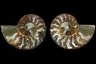 "3.45"" Cut & Polished Ammonite Fossil - Agatized For Sale, #78359"