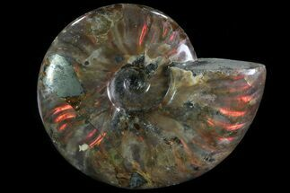 "Buy 4.75"" Iridescent Red Flash Ammonite (With Pyrite) - Madagascar - #81382"