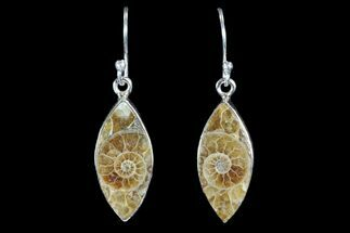 Fossil Ammonite Earrings - Sterling Silver For Sale, #81635