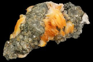 "2.8"" Cerussite Crystals with Bladed Barite on Galena - Morocco For Sale, #82352"