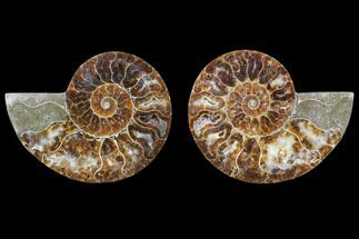 "2.9"" Cut & Polished Ammonite Fossil - Agatized For Sale, #82274"
