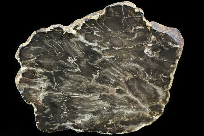 "10"" Jurassic Petrified Wood (Pentoxylon) End Cut - Australia"