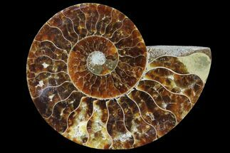 "3"" Agatized Ammonite Fossil (Half) - Madagascar For Sale, #83834"