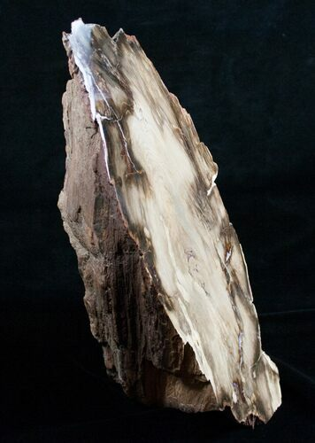 "11"" Petrified Wood Free-Standing Sculpture"