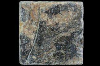 Various - Fossils For Sale - #86739