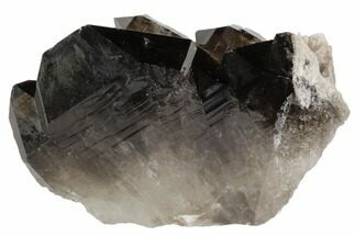 "3.4"" Dark Smoky Quartz Crystal Cluster - Brazil For Sale, #84800"