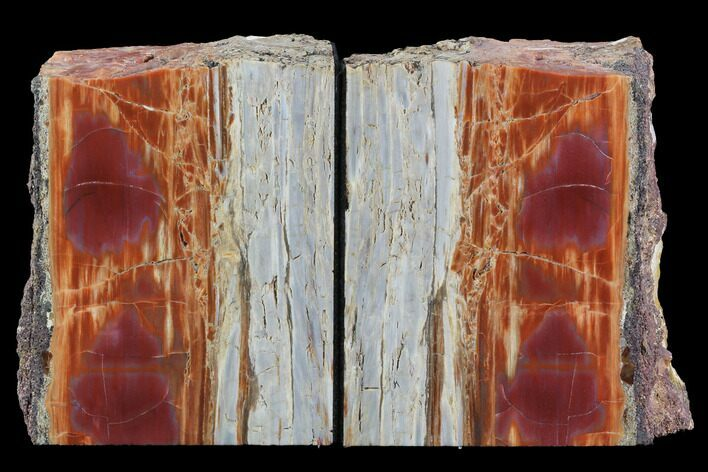 "5.5"" Tall, Arizona Petrified Wood Bookends - Red & Purple"