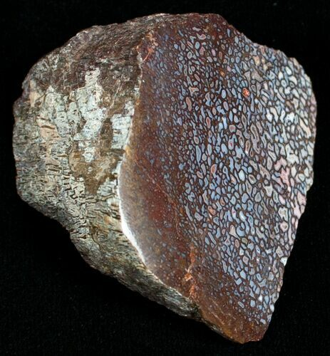 Agatized Dinosaur Bone Chunk (Polished)