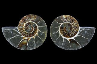 "3.5"" Cut & Polished Ammonite (Anapuzosia?) Pair - Madagascar For Sale, #88019"