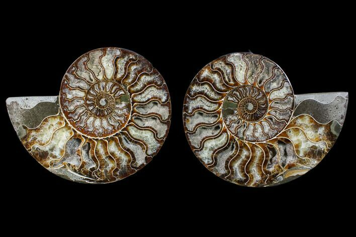 "6.35"" Cut & Polished Ammonite Fossil - Crystal Chambers"