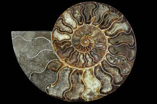 "6.95"" Agatized Ammonite Fossil (Half) - Agatized For Sale, #91193"