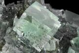 "3.8"" Fluorescent, Green, Cubic Fluorite Crystals (New Find) - China - #93657-2"