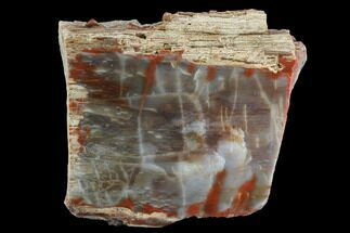 "6.1"" Vibrantly Colored, Polished Petrified Wood Section - Arizona For Sale, #95024"