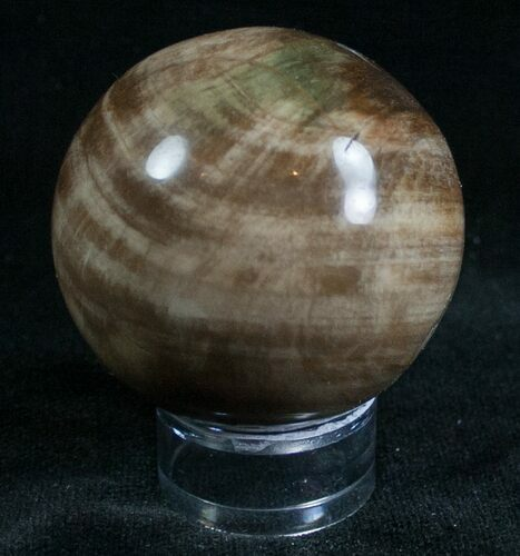 "1.75"" Colorful Petrified Wood Sphere"