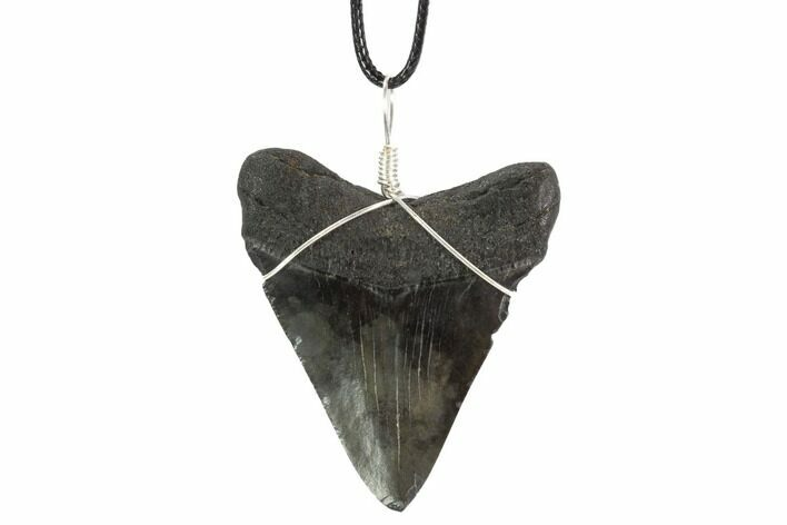 "2.5"" Fossil Megalodon Tooth Necklace"