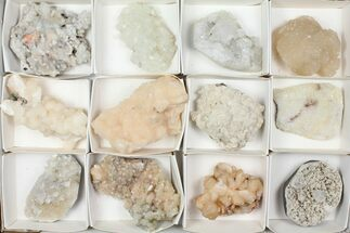 Various - Fossils For Sale - #95610