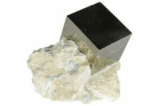 Pyrite - Fossils For Sale - #95634