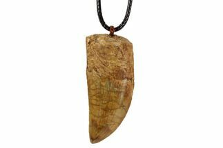 Buy Real Dinosaur Tooth (Carcharodontosaurus) Necklace - #96073