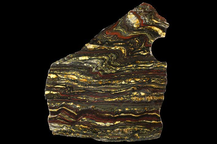"8.2"" Polished Tiger Iron Slab - (2.7 Billion Years Old)"