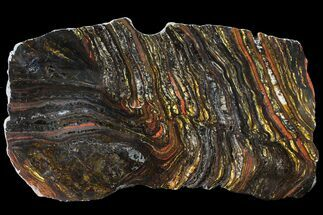 "Buy 12"" Polished Tiger Iron Stromatolite - (2.7 Billion Years) - #95911"