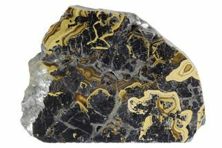 "Buy 2.7"" Polished Schalenblende Slice - Poland - #96778"