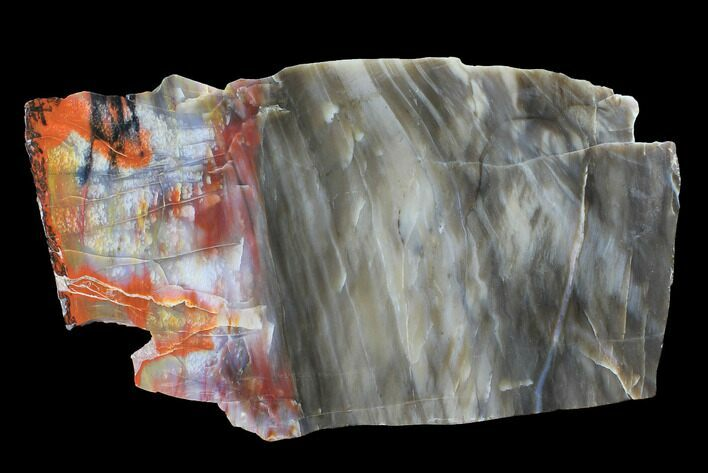 "12"" Wide, Polished Petrified Wood Slab - Arizona"