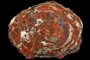Petrified Wood For Sale