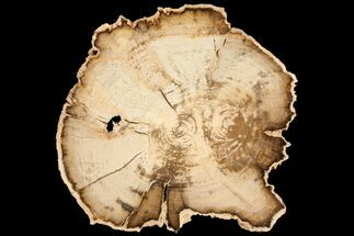 Mahogany - Fossils For Sale - #100341