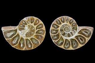 "Buy 4.15"" Cut & Polished, Agatized Ammonite Fossil - Jurassic - #100534"