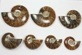 "Wholesale: 3-5"" Whole Polished Ammonites (Grade A) - 25 Pieces - #101354-1"