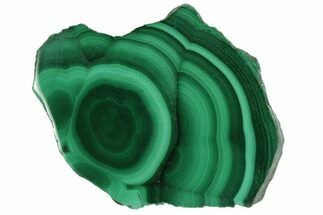 "Buy 1.3"" Polished Malachite Stalactite Slice - Congo - #101920"