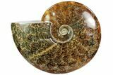 "7.5"" Polished, Agatized Ammonite (Cleoniceras) - Madagascar - #102605-1"