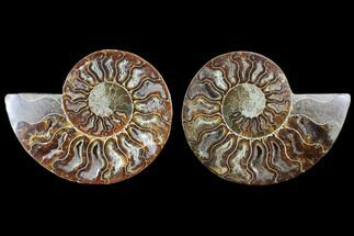 "Buy 4.1"" Cut & Polished Ammonite Fossil - Crystal Chambers - #103081"