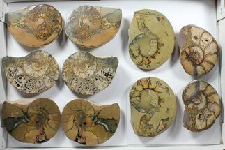 "Buy Wholesale Lot: 4-6"" Morocco Cut & Polished Ammonites - 37 Pairs - #103822"